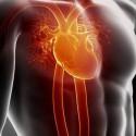 ideale hartslag bepalen
